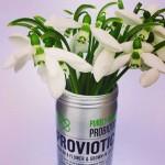 ПРОВИОТИК / PROVIOTIC - български растителен пробиотик от кокиче /отгледан в морковен сок, веган/, 24 таблетки за смучене x 500 mg